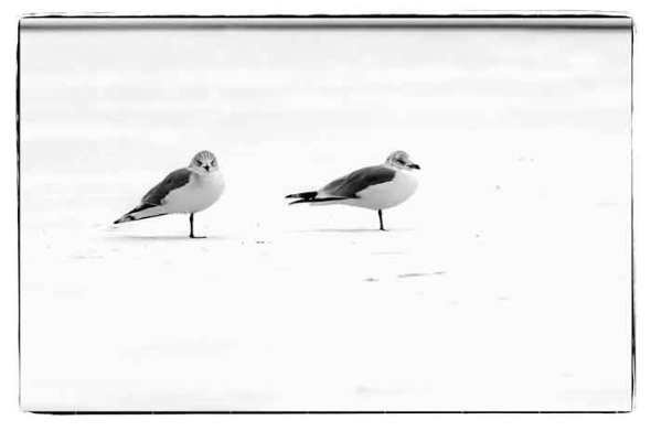 twin-brooks-seagulls-B&W--20130128-DSC_8877